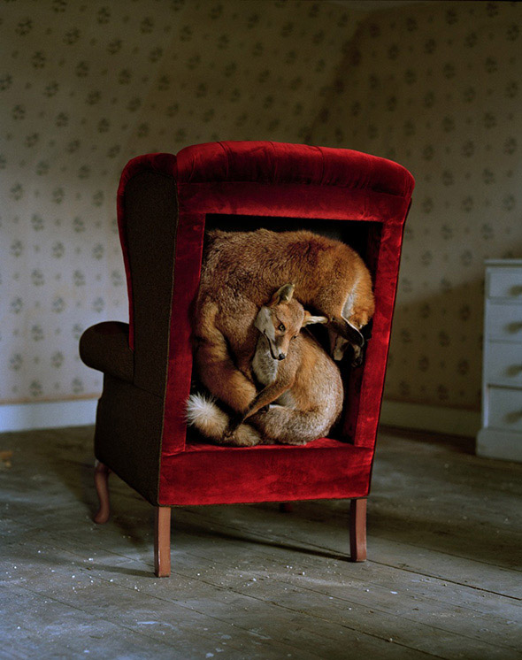 Trophy Chair Foxes