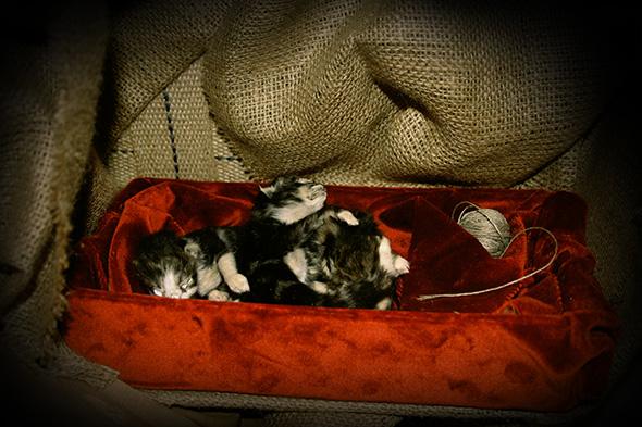 Prayer Chair detail kittens